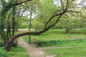L'arboretum de Charuau